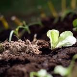 Mali Działkowcy zakładają warzywnik, kwiecień 2015