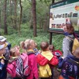 Projekt leśny – piknik w Puszczy Niepołomickiej